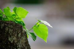 Die Blätter Lizenzfreies Stockfoto