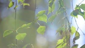 Die Blätter stock video footage