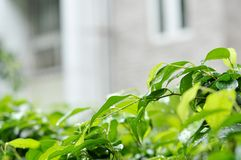 Die Blätter außerhalb des Hauses Stockfotografie