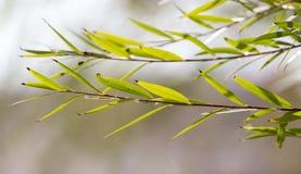 Die Blätter auf dem Baum in der Natur Stockfotos