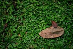 Die Blätter auf dem grünen Gras Stockbild