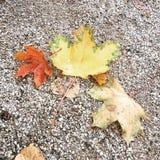Die Blätter aus den Grund Lizenzfreie Stockfotografie