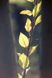 Die Blätter der Anlage in der Natur Lizenzfreies Stockfoto