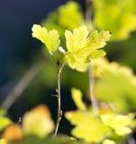 Die Blätter der Anlage in der Natur Lizenzfreie Stockfotos