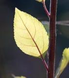 Die Blätter der Anlage in der Natur Lizenzfreie Stockfotografie