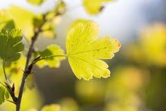 Die Blätter der Anlage in der Natur Stockfotos