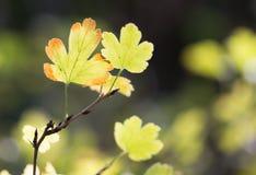 Die Blätter der Anlage in der Natur Stockfotografie