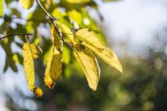 Die Blätter der Anlage in der Natur Lizenzfreie Stockbilder