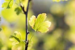 Die Blätter der Anlage in der Natur Stockfoto
