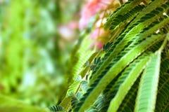 Die Blätter der Bäume verwischen die Sonne Lizenzfreie Stockbilder