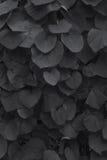 Die Blätter der Klette Lizenzfreies Stockfoto
