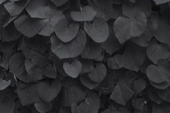 Die Blätter der Klette Lizenzfreie Stockbilder
