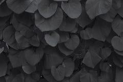 Die Blätter der Klette Stockfotos
