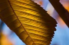 Die Blätter des Herbstes Lizenzfreies Stockfoto