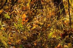Die Blätter im Herbstmagiewald Lizenzfreies Stockbild
