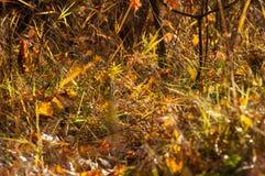 Die Blätter im Herbstmagiewald Stockbilder