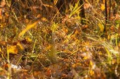 Die Blätter im Herbstmagiewald Stockfotografie