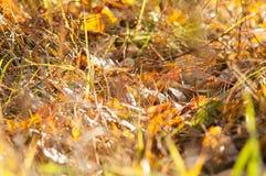 Die Blätter im Herbstmagiewald Lizenzfreie Stockfotos