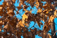 Die Blätter vor fallen unten stockbilder