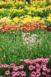Die blühenden Blumen Stockfotos