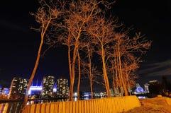 Die blattlosen Bäume, die durch Gelb übertragen wurden, färbten Lichter nachts stockbilder