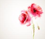 Die blühenden roten Mohnblumen Stockbilder