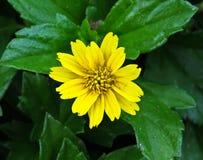 Die Blume 10 Lizenzfreies Stockbild