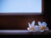 Die Blume 13 Stockfoto