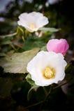 Die Blume Stockbilder