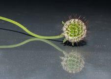 Die Blume Stockfotografie