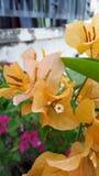 Die Blume Stockfoto