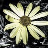 Die Blume Stockbild