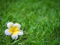 Die Blume auf dem Gras Lizenzfreies Stockbild