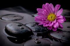 Die Blume auf Fluss entsteint Badekurszene auf schwarzem backgrou Stockbilder