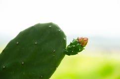 Die Blume der Kaktusspitze unter dem Sonnenschein Lizenzfreie Stockfotografie