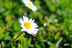 Die Blume des Lebens Stockbild