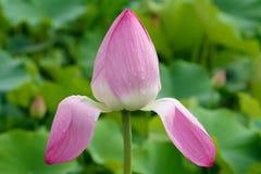 Die Blume, die in einer Solarleuchte sich aalt Lizenzfreies Stockfoto