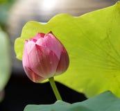 Die Blume, die in einer Solarleuchte sich aalt Stockfotografie