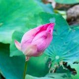 Die Blume, die in einer Solarleuchte sich aalt Lizenzfreies Stockbild