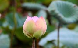 Die Blume, die in einer Solarleuchte sich aalt Stockbild