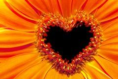 Die Blume, die oben mit einem Herzen nah ist, formte Staubgefässabschnitt Stockfoto