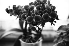 Die Blume Künstlerischer Blick in Schwarzweiss Stockfotos
