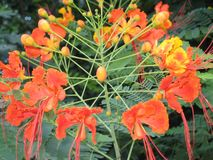 Die Blume in Mexiko City lizenzfreies stockfoto