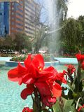 Die Blume und der Brunnen stockfotos