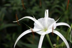 Die Blume in voller Blüte Stockfotos