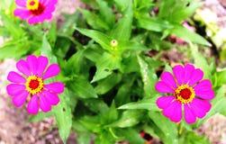 Die Blume von Papier 1 Lizenzfreie Stockfotos