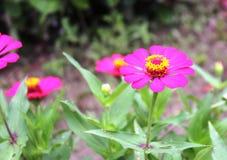 Die Blume von Papier 3 Lizenzfreie Stockfotografie
