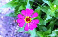 Die Blume von Papier 4 Lizenzfreie Stockfotografie