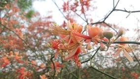 Die Blumen stockfotos