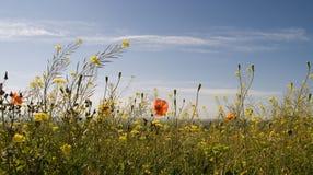 Die Blumen Stockfoto